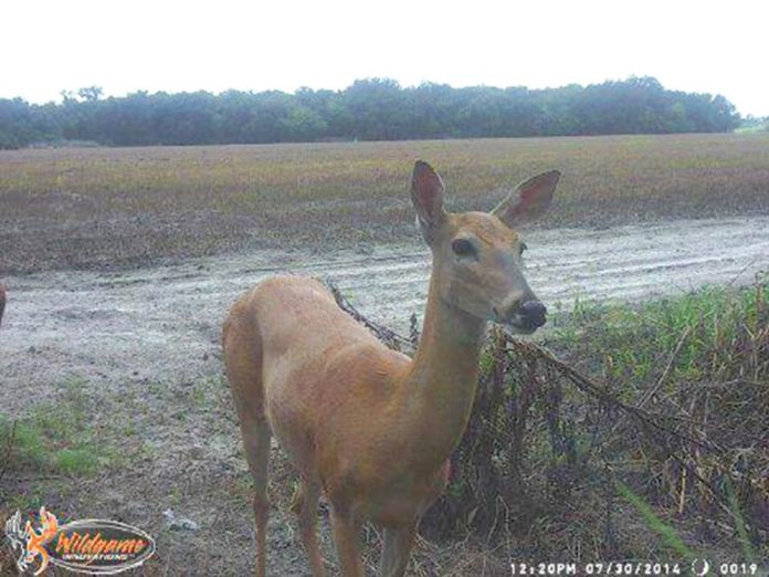 Trail Camera Coverage by Teri Woodrum