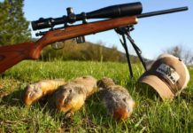 5 Tips To Find Best 22lr Scope For Squirrel Hunting | Hunting Magazine