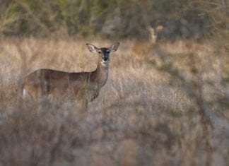 Deer Hunting Season in Wisconsin | Hunting Magazine