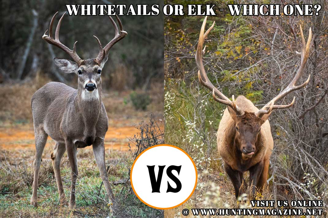 Hunting Meme: Hunting Whitetail Deer vs Hunting Elk - Which One Do You Choose?