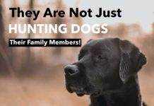 Hunting Meme: They Are Not Just Hunting Dogs - Their Family Members | Hunting Magazine